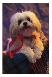 There are many famous pets who have been memorialized for our future