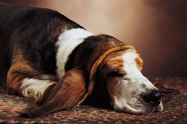 Memorializing a pet will honor their life and comfort us during the mourning period