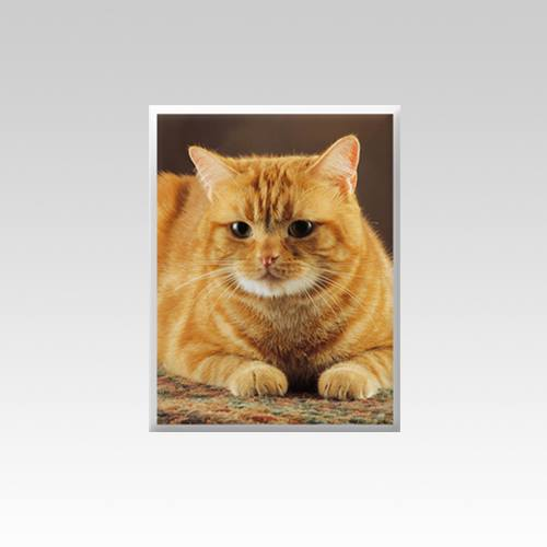 Pet Cemetery Photograph Vertical V