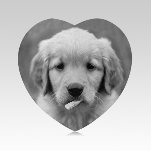 Pet Memorial Pictures