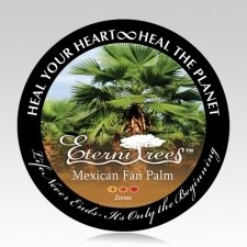 Mexican Fan Palm Memorial Tree Urn