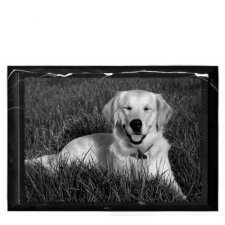 Pet Marble Photo Plaque