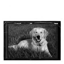 Pet Marble Medium Photo Plaque