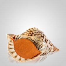 Triton Shell Pet Cremation Urn