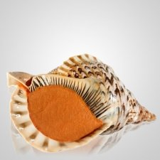 Triton Shell Keepsake Urn