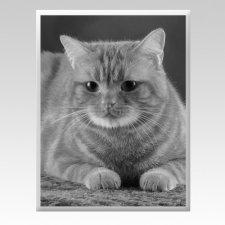 Pet Memorial Photographs Vertical