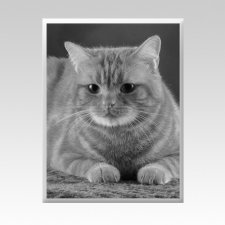 Pet Memorial Photographs Vertical II