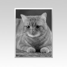 Pet Memorial Photographs Vertical III