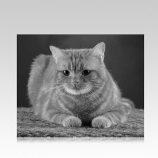 Pet Memorial Photographs Horizontal III