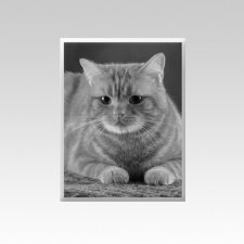 Pet Memorial Photographs Vertical IV