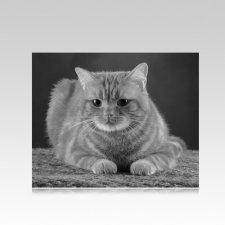 Pet Memorial Photographs Horizontal IV