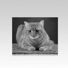Pet Memorial Photographs Horizontal V