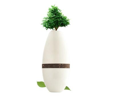 Living Tree Urn