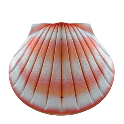 Coral Shell Biodegradable Cremation Urns