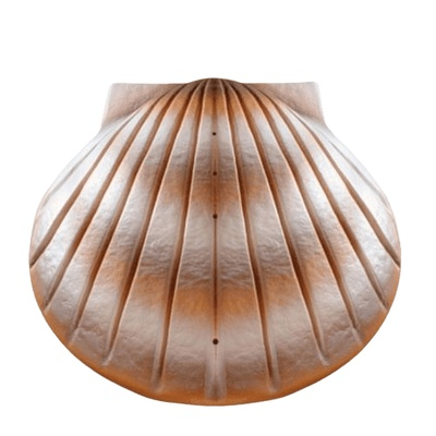 Pearl Shell Biodegradable Cremation Urns