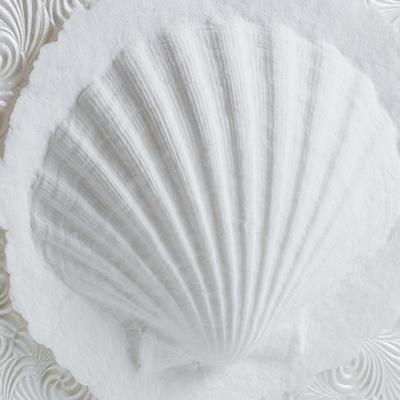 Shell Swirl Biodegradable Urn