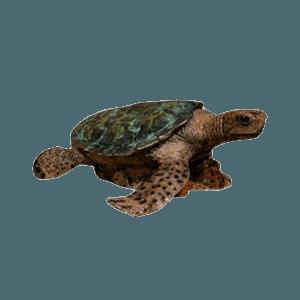 Sea Turtle Bronze Cremation Urn